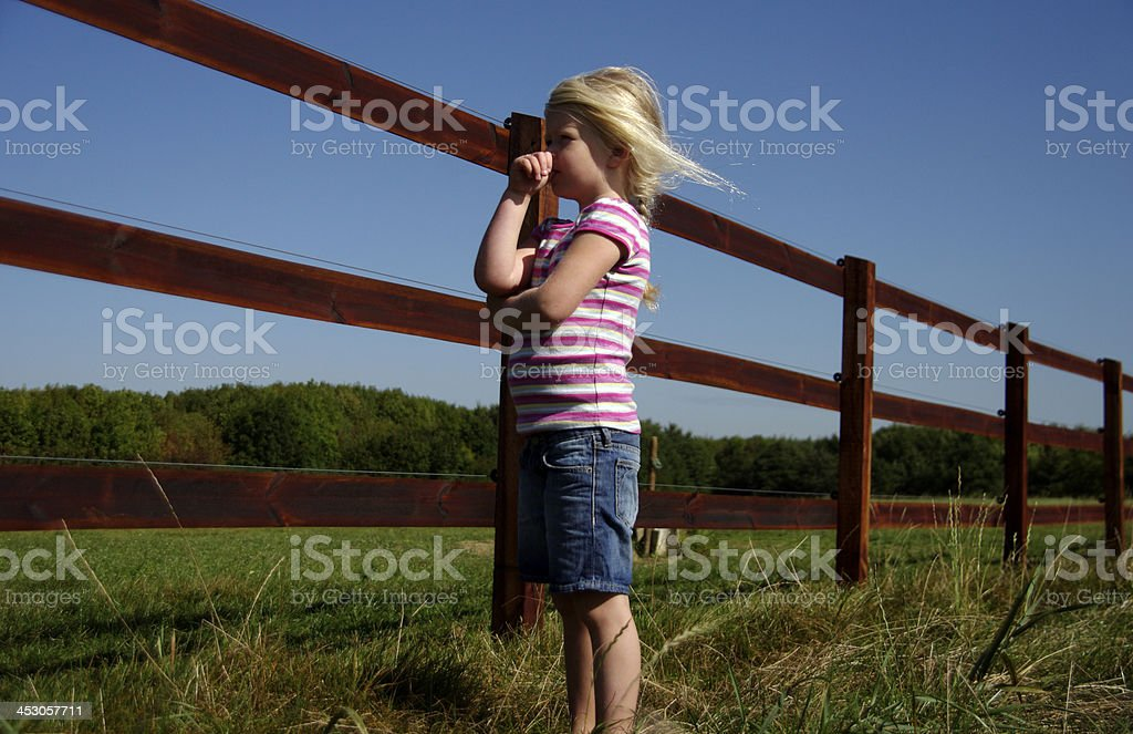 Little girl is looking for the horses stock photo