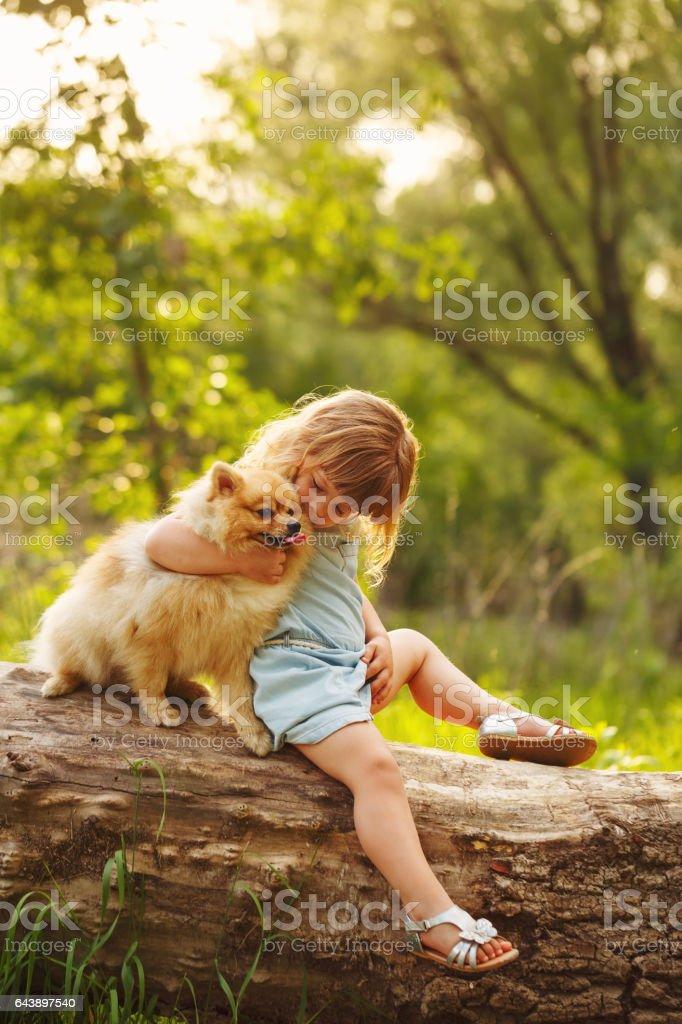Little girl kisses Spitz stock photo
