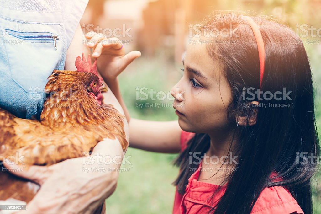 Little girl looking at a hen stock photo