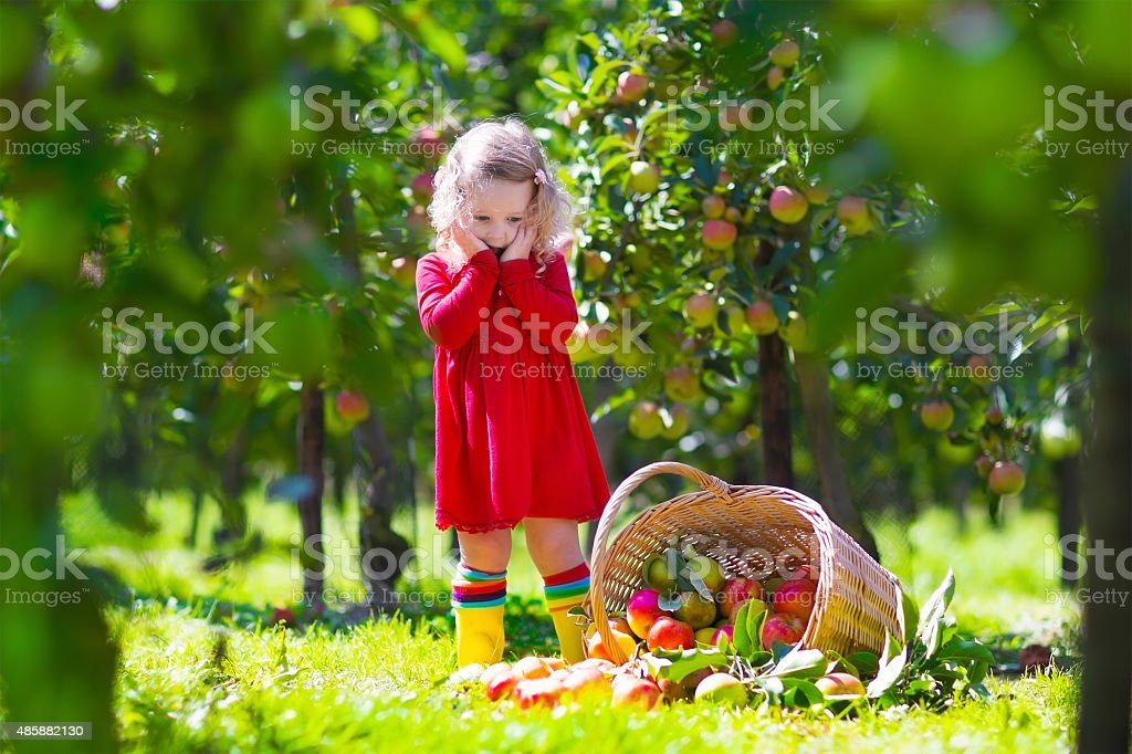 Little girl looking at tipped over apple basket stock photo