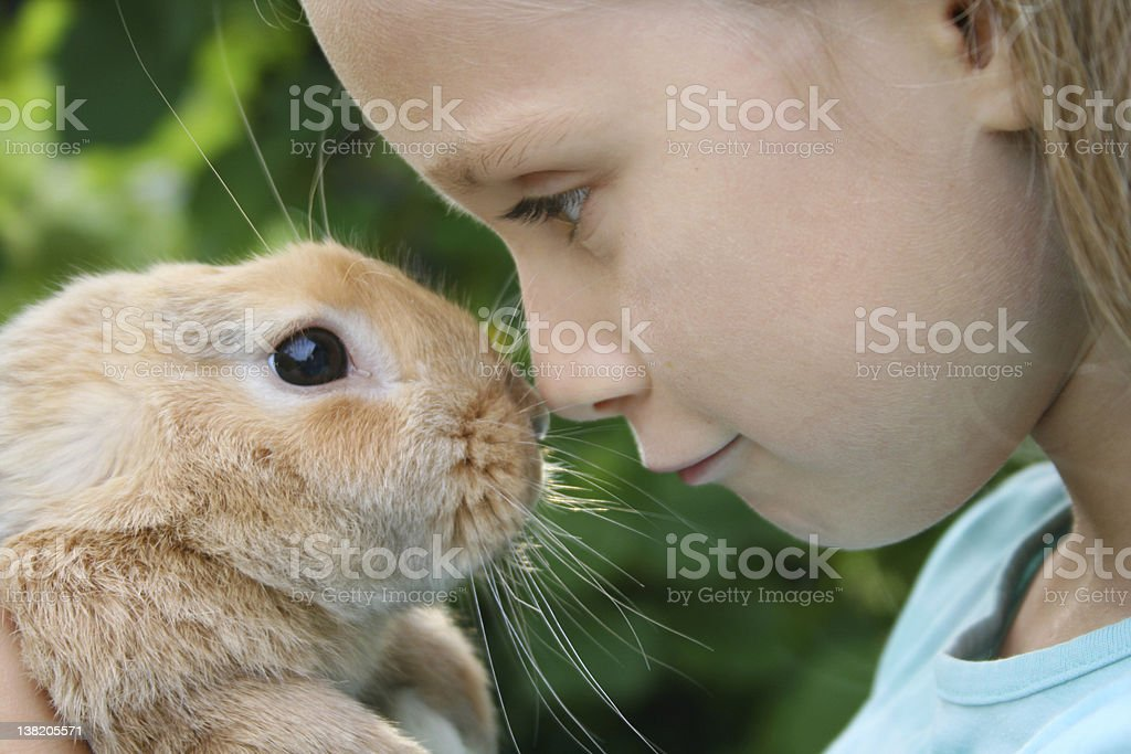 A little girl making friends with a rabbit stock photo