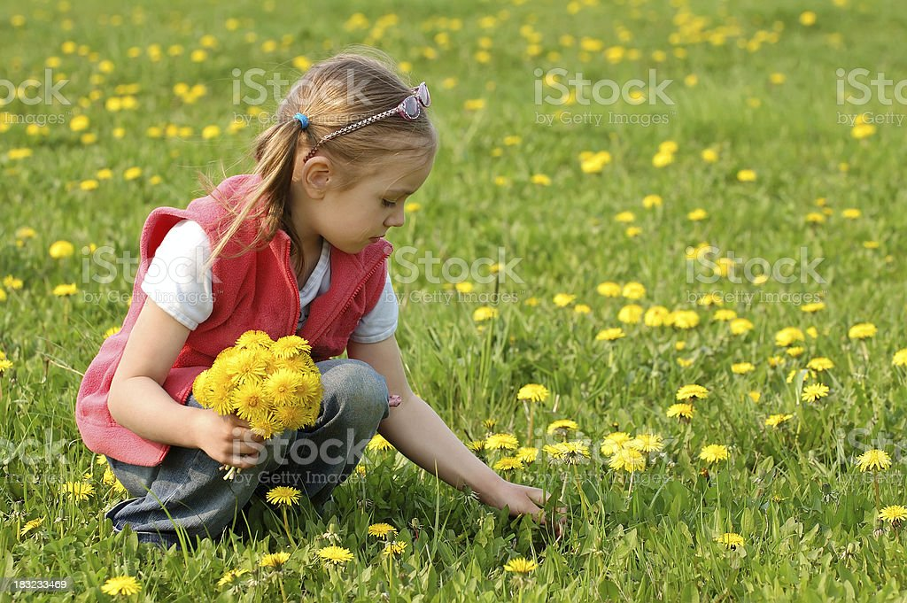 Little girl on a field royalty-free stock photo