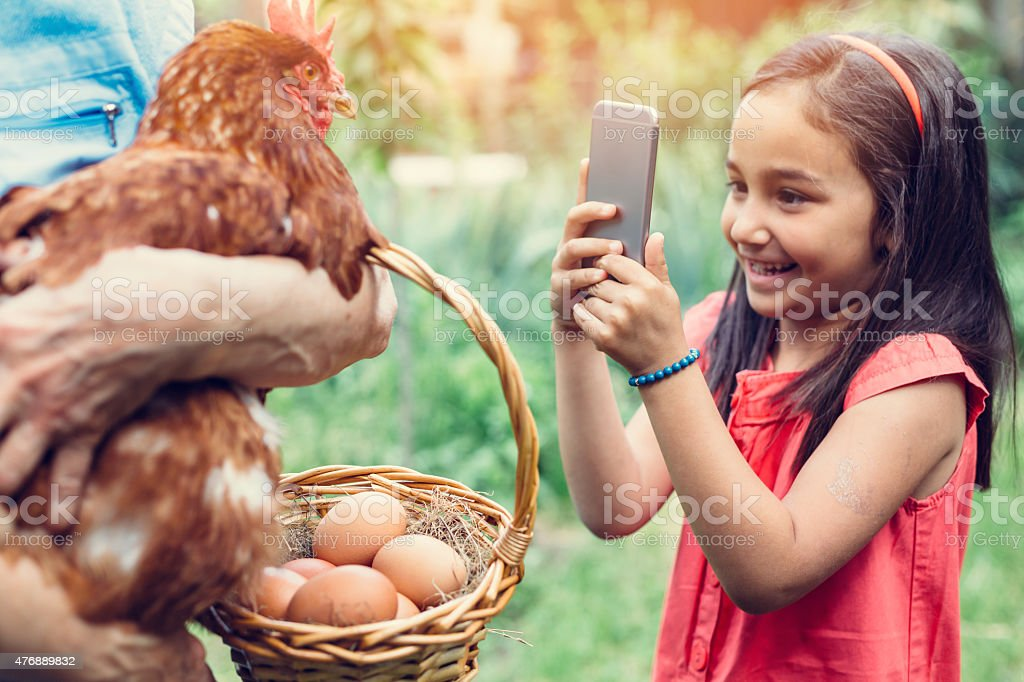 Little girl photographing a hen stock photo