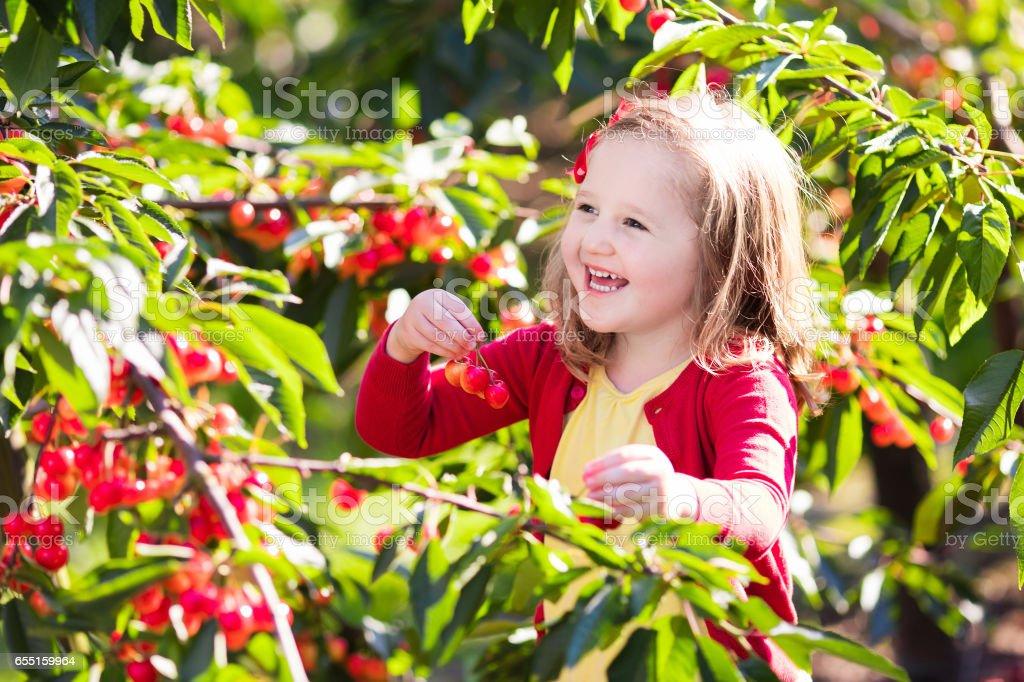 Little girl picking cherry in fruit garden stock photo
