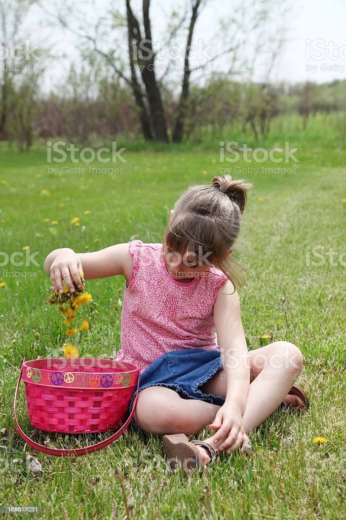 Little girl picking dandelions flowers royalty-free stock photo
