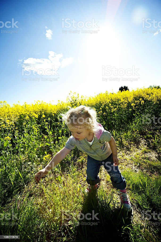 Little Girl Picking Flowers in Field on Sunny Day royalty-free stock photo