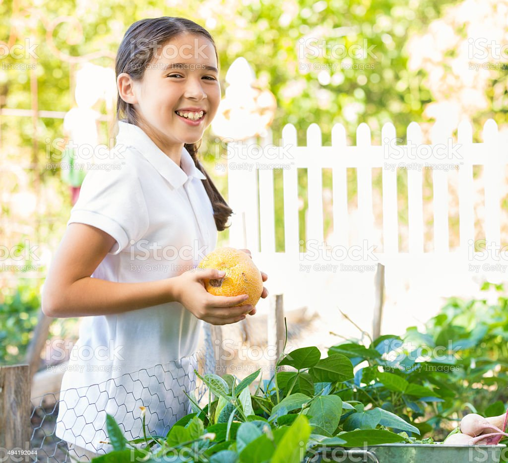 Little girl picking vegetables from garden during field trip stock photo