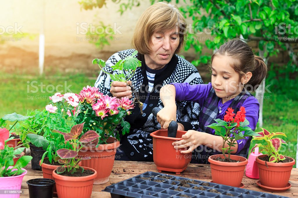 Little girl plant flowers in pot with her grandmother stock photo