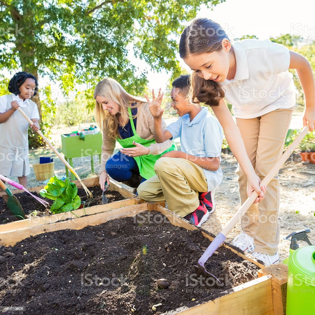 Little girl planting vegtables in school garden during science class stock photo