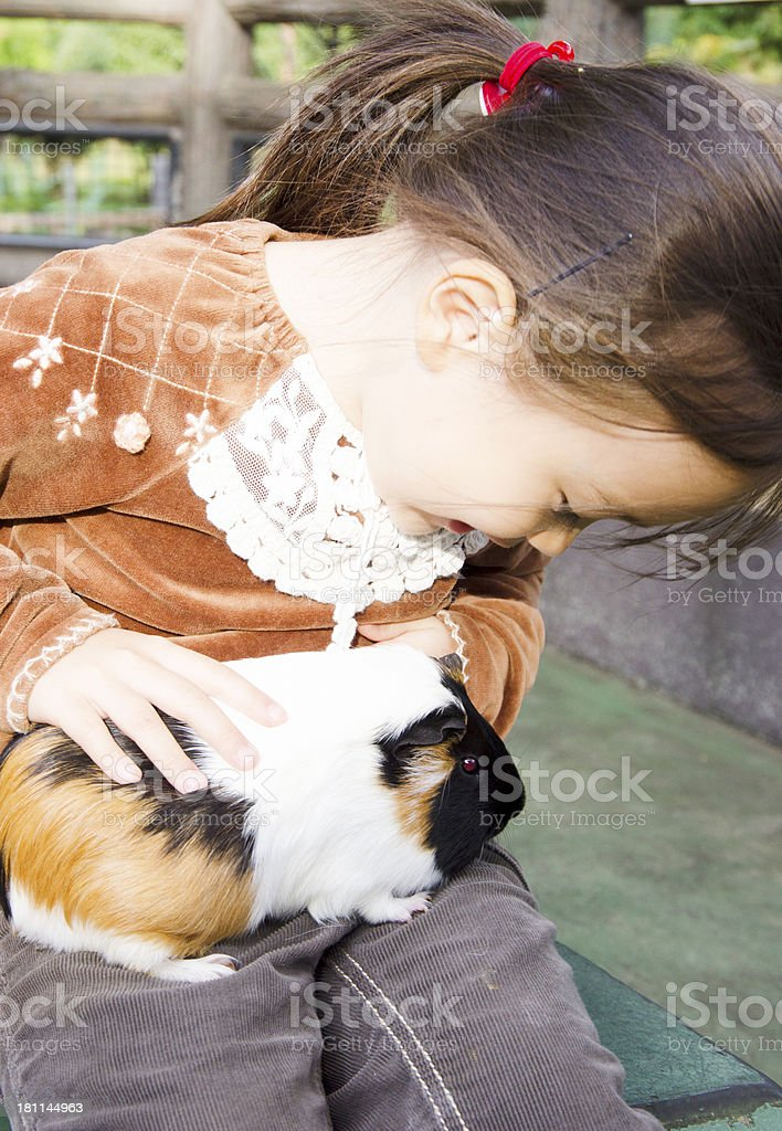 little girl play with guinea pig royalty-free stock photo