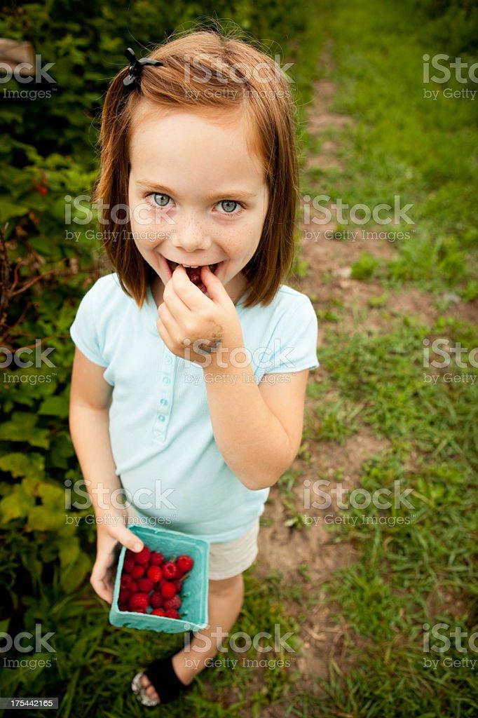 Little Girl Sampling the Carton of Raspberries She Picked royalty-free stock photo