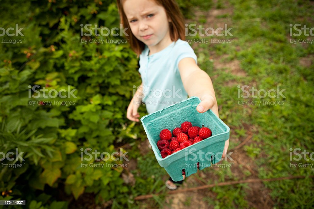 Little Girl Showing Carton of Raspberries She Picked royalty-free stock photo