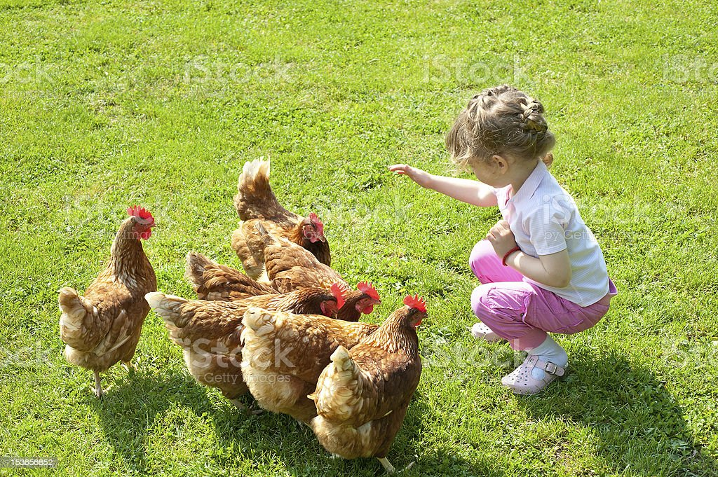 A little girl sitting in front of 6 chickens  stock photo