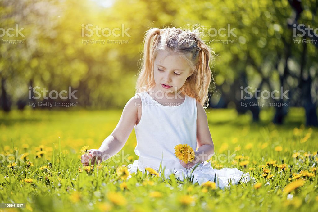 Little girl sitting on a field of dandelions royalty-free stock photo