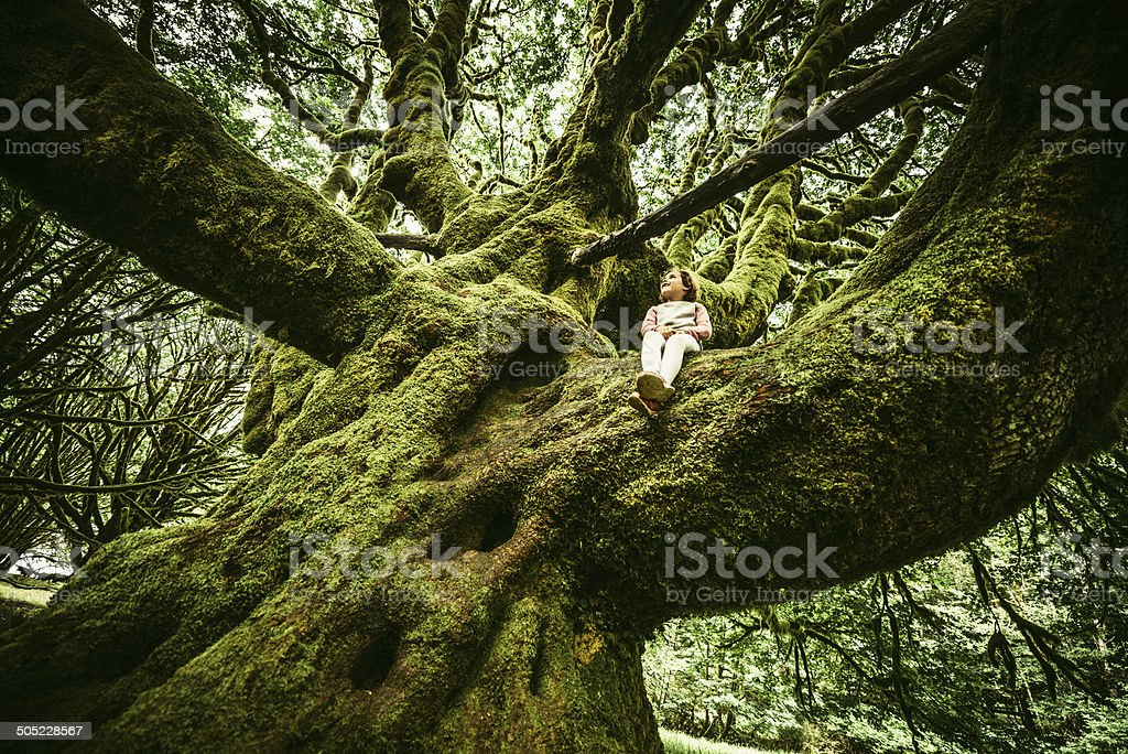 Little Girl Sitting on Centennial Tree stock photo