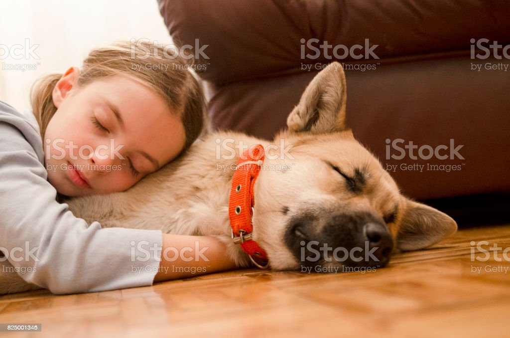 Little girl sleep embracing her dog on the parquet floor. Pet and...