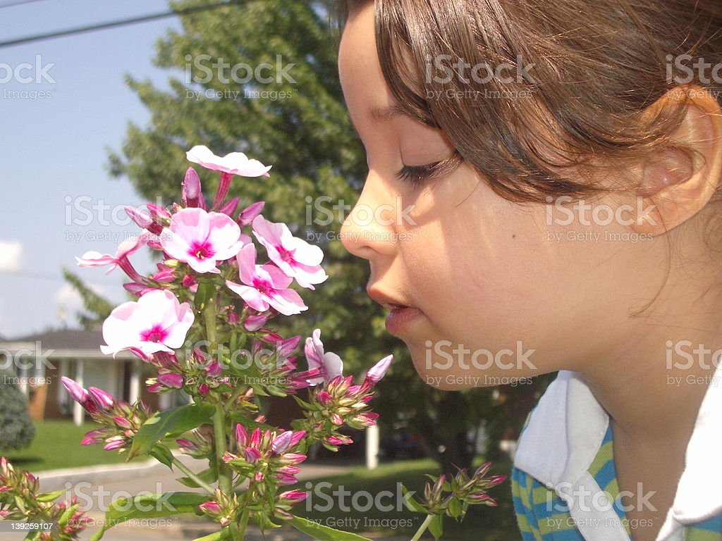 little girl smelling flowers royalty-free stock photo