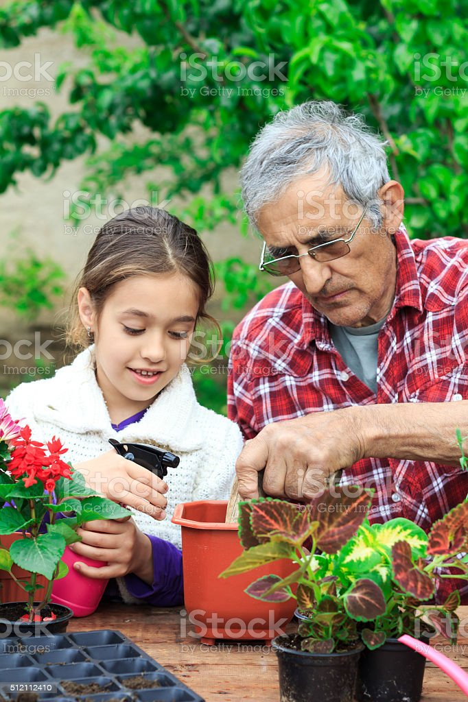 Little girl spraying flowers in pot with her grandfather stock photo