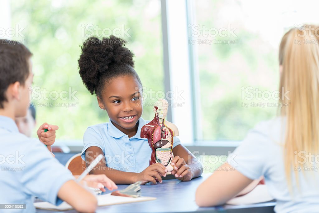 Little girl studying human body in private school science class stock photo