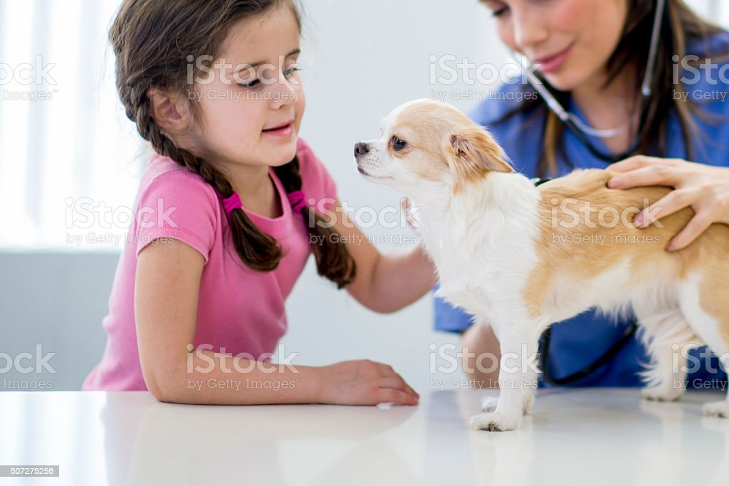 Little Girl Taking Her Puppy to the Vet stock photo