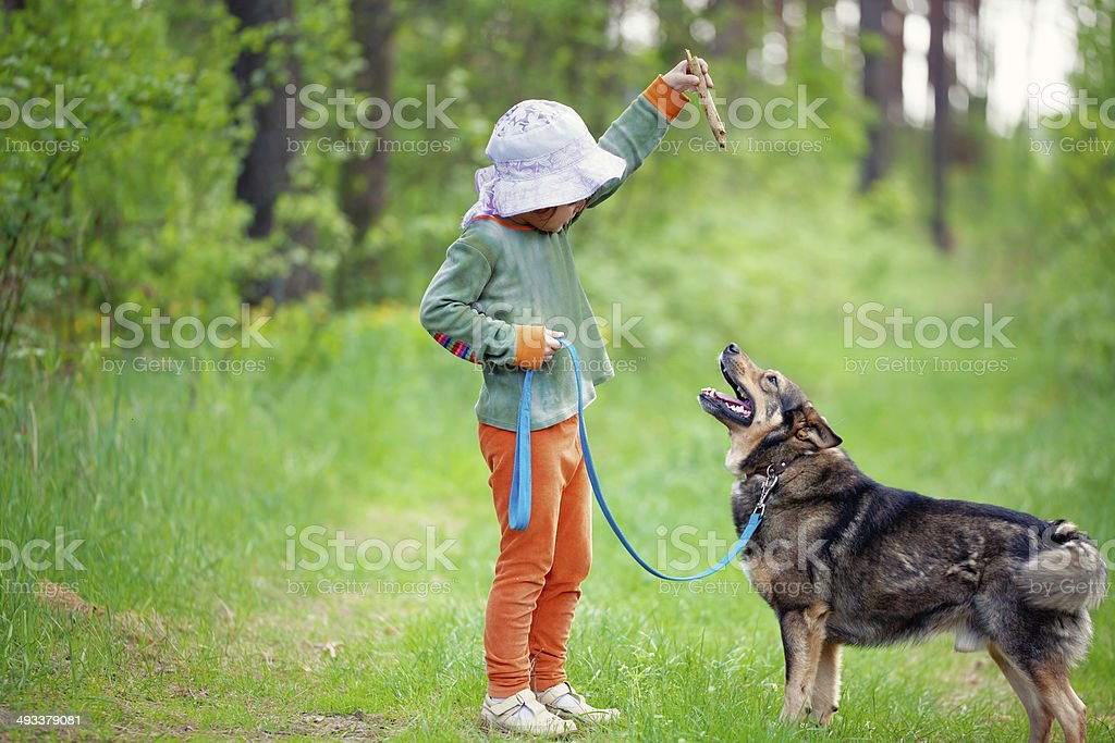 Little girl training a dog in the forest stock photo