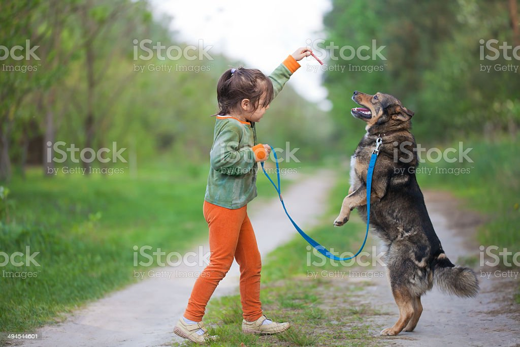Little girl training a dog stock photo