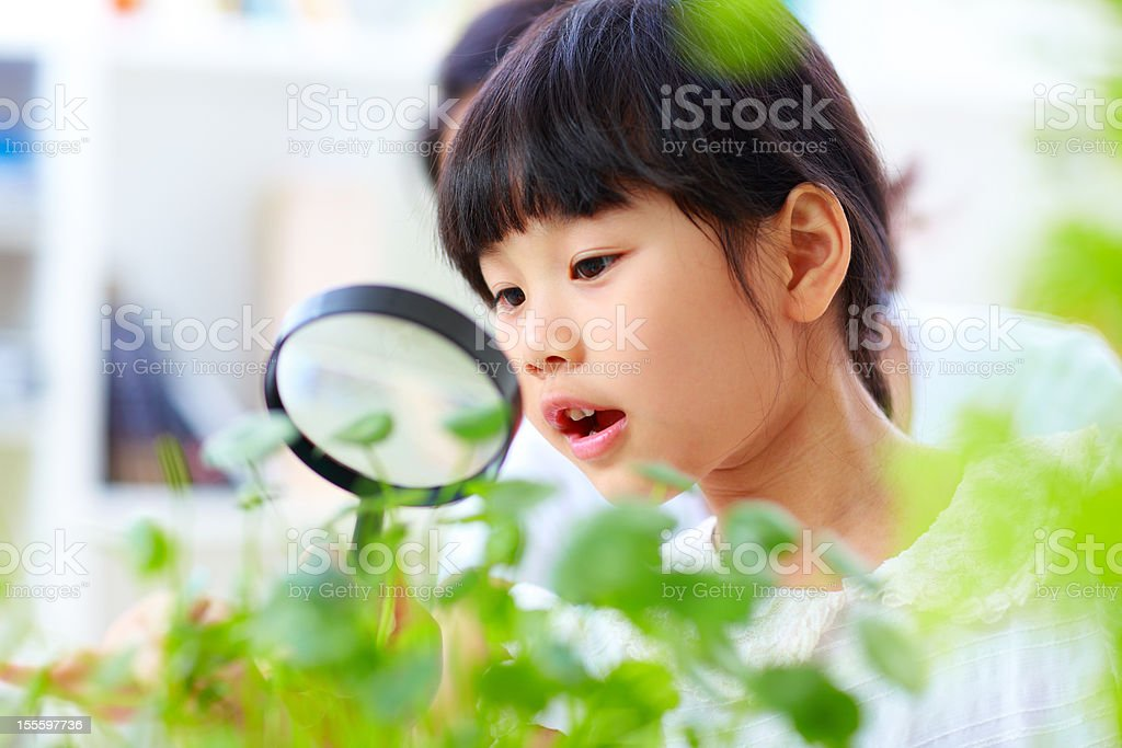 little girl using magnifying glass watching plant stock photo