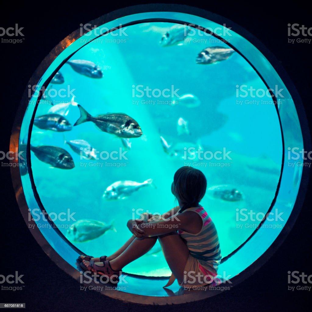 Little girl visiting a huge aquarium stock photo