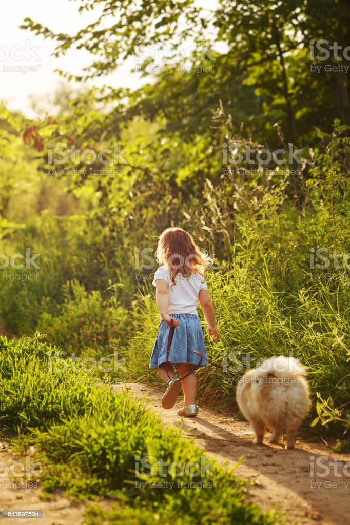 Little girl walking with a dog stock photo