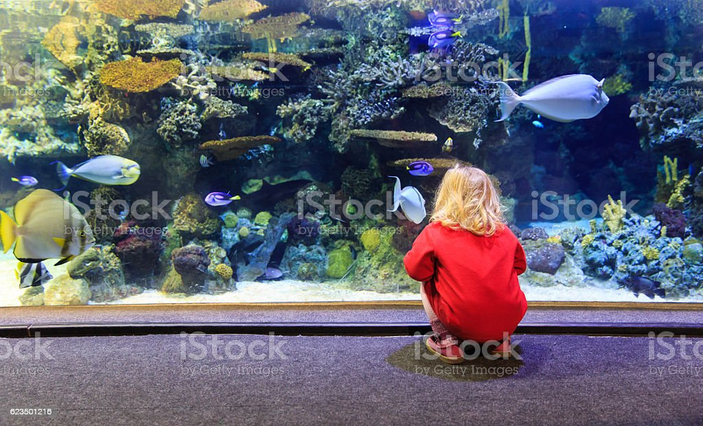 little girl watching fishes in a large aquarium stock photo