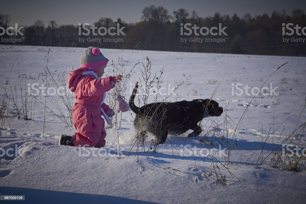 Little girl watching the dogs playing in the snow stock photo