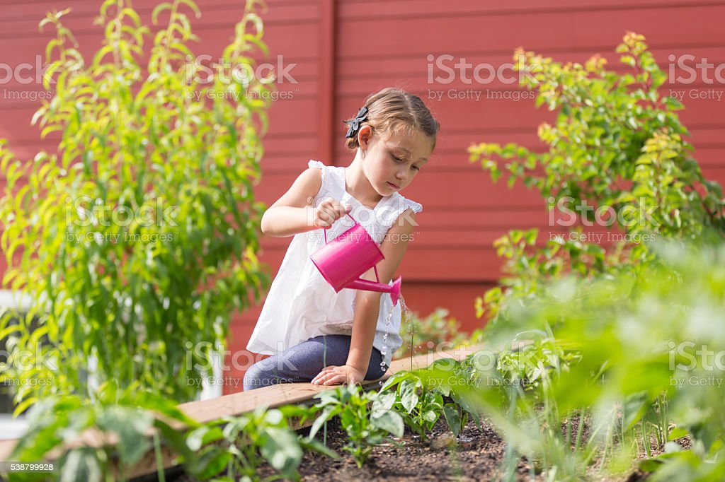 Little girl watering her plants in the garden stock photo