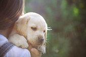 Little girl with a Golden retriever puppy