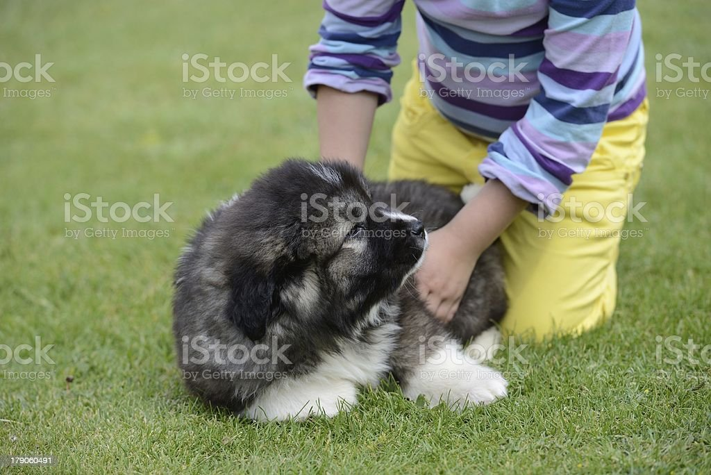 Little girl with a puppy of Caucasian Shepherd royalty-free stock photo