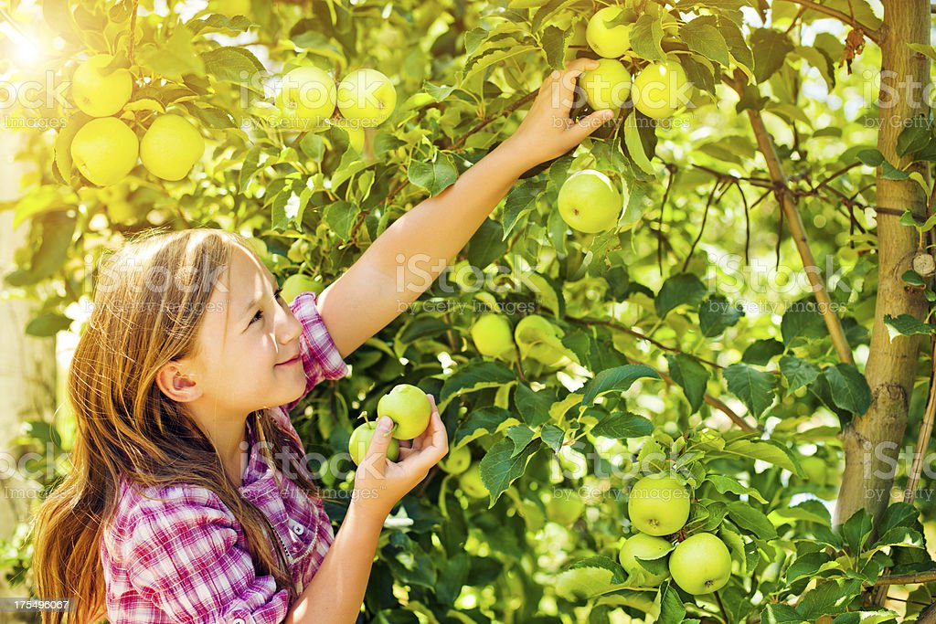 Little girl with apples stock photo