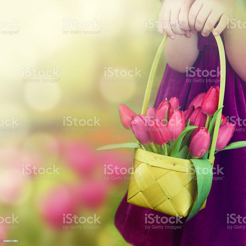 Little girl with basket of tulips. stock photo