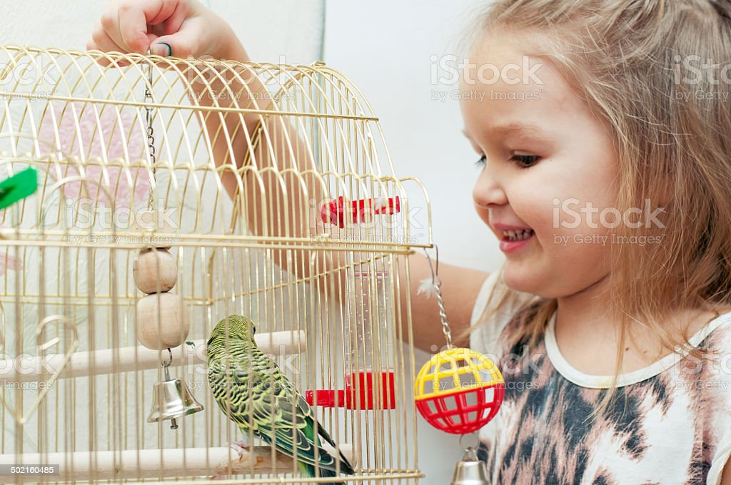 Little girl with budgie stock photo