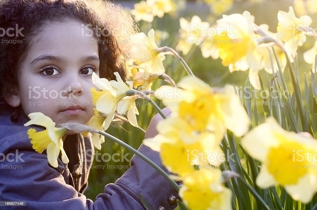 Little Girl with Daffodil at Sunset royalty-free stock photo