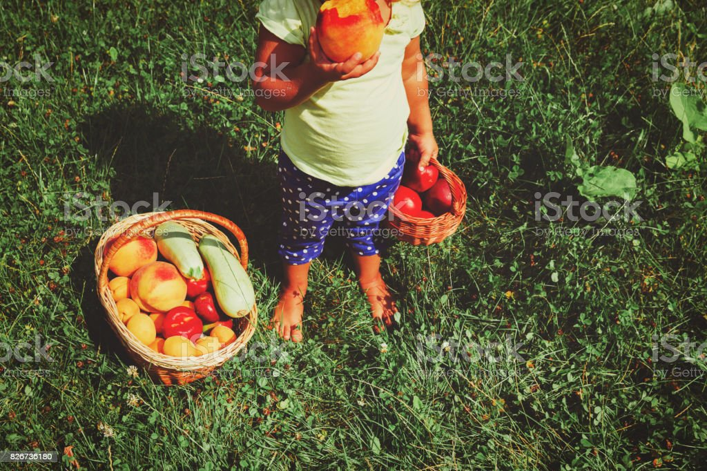 little girl with fruits just picked in garden stock photo