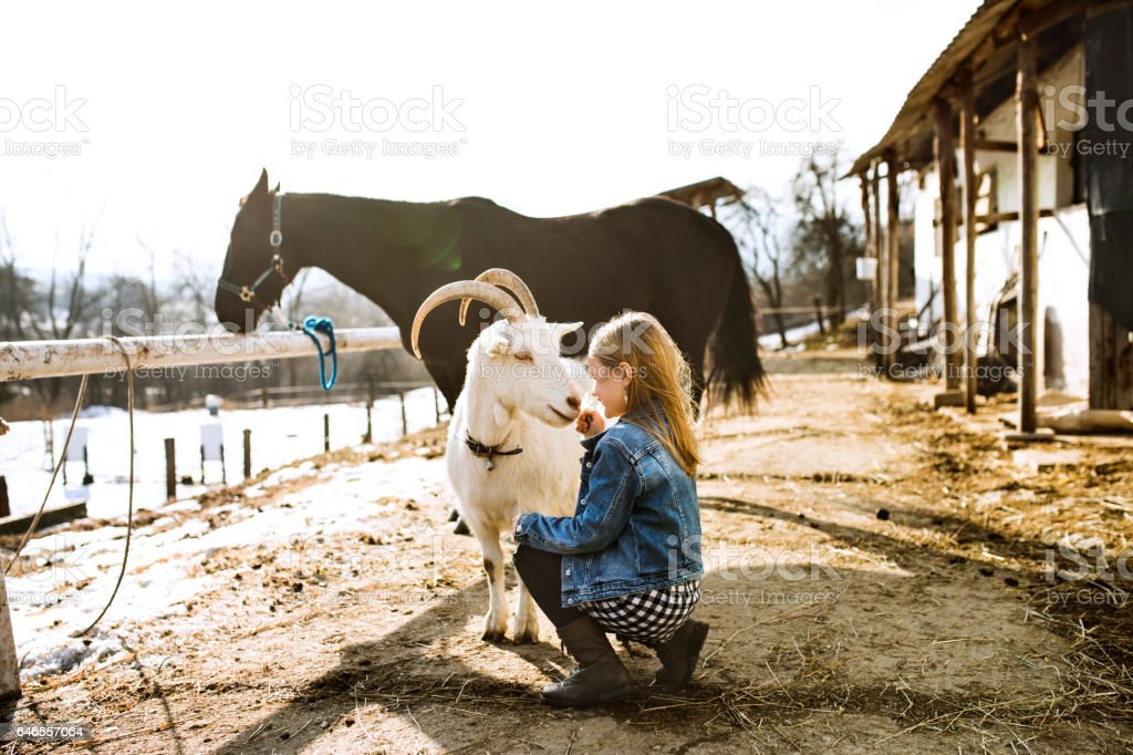 Little girl with goat and horse on sunny winter day. stock photo