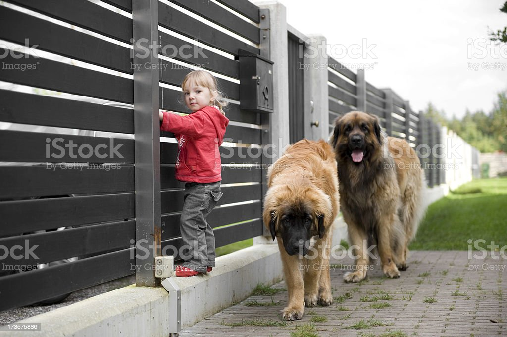 Little girl with her dogs stock photo