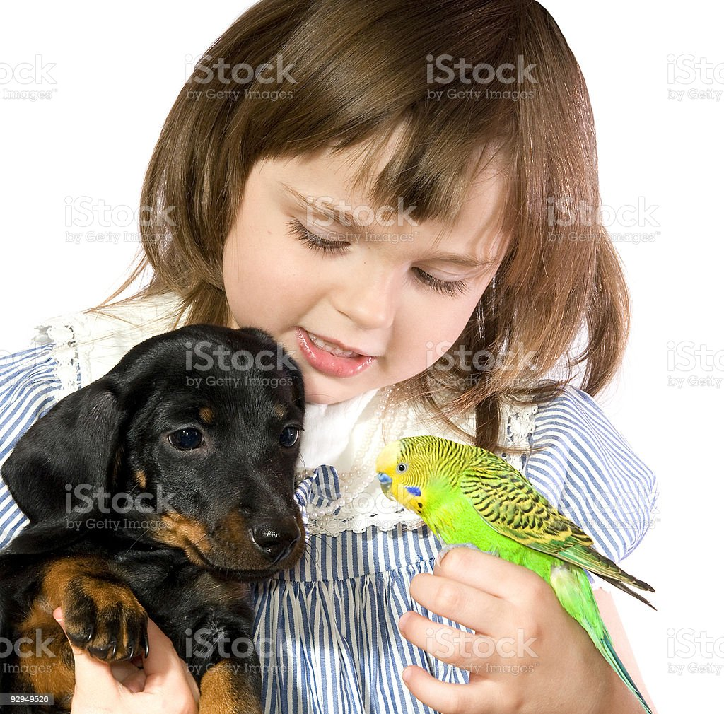 little girl with pets stock photo