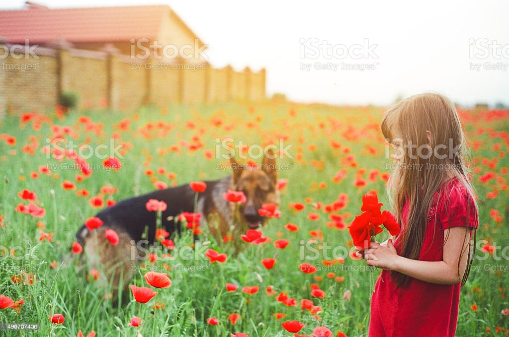 Little girl with poppies stock photo
