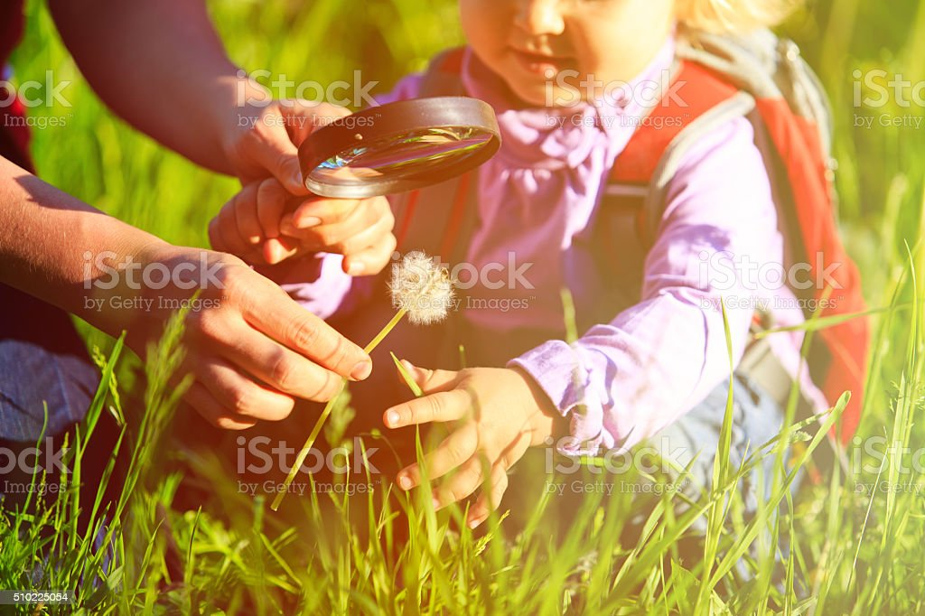 Little girl with teacher examining field flowers using magnifying glass stock photo
