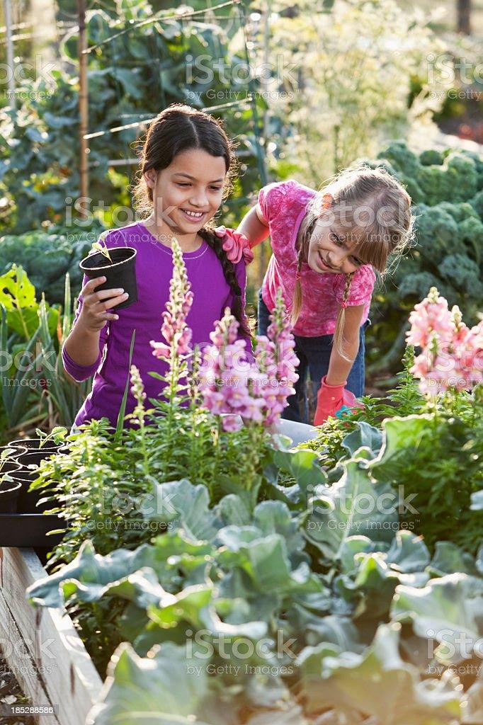 Little girls in garden with seedlings stock photo