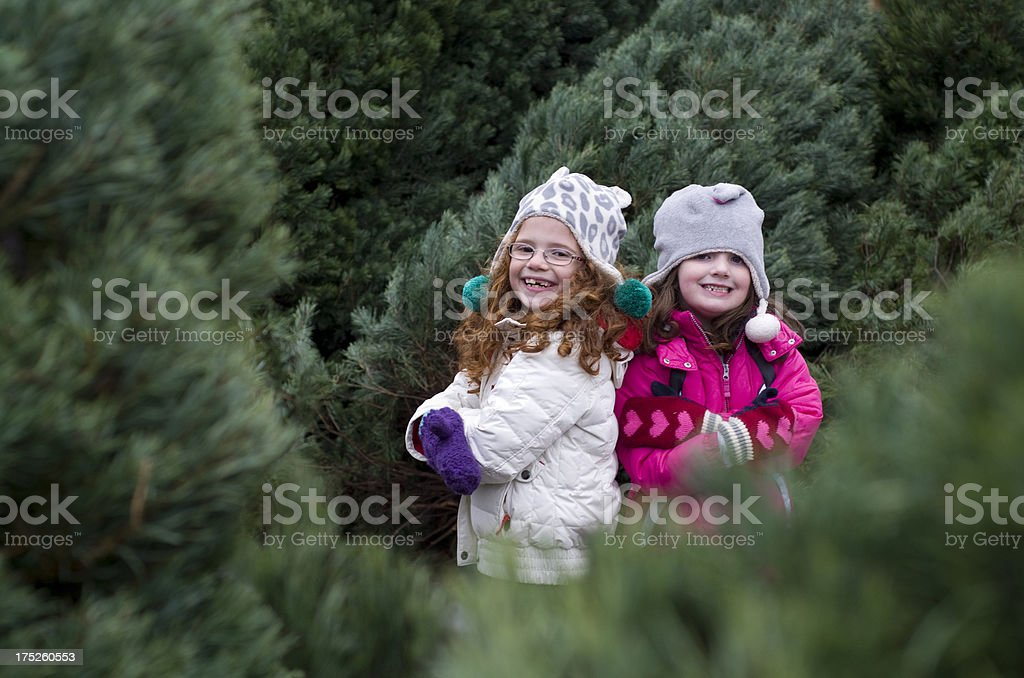 LIttle girls look for the perfect christmas tree stock photo