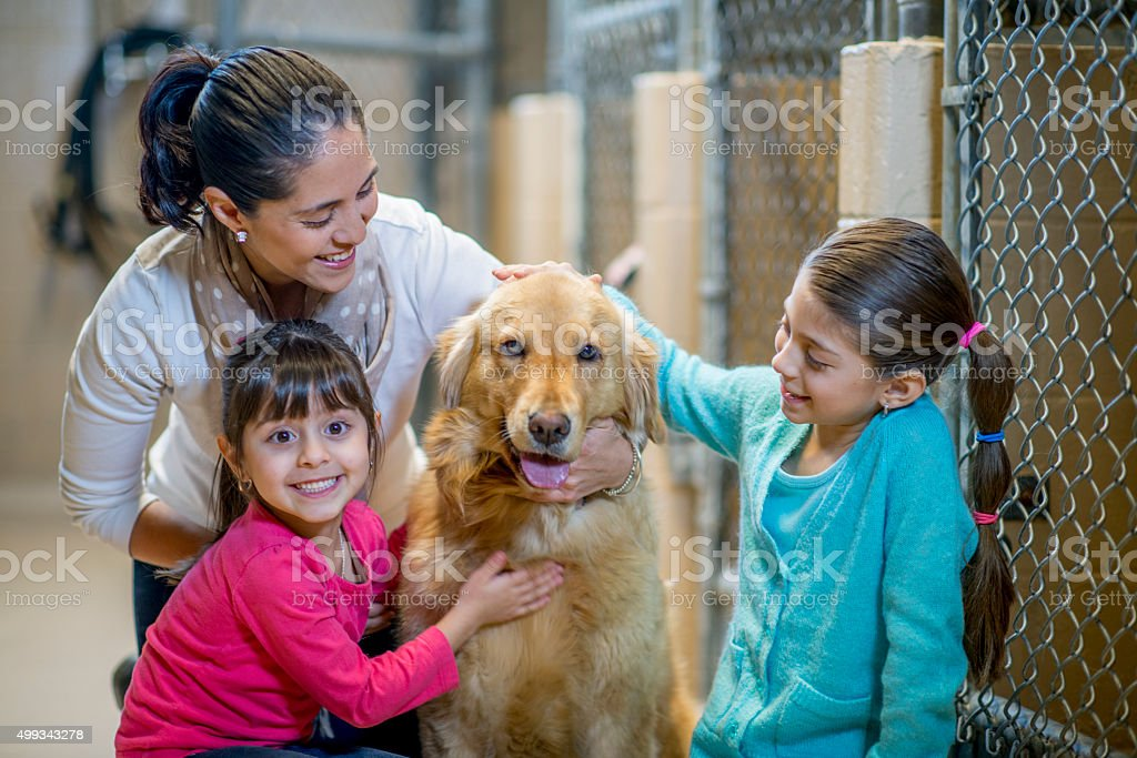 Little Girls Petting a Dog at the Pound stock photo