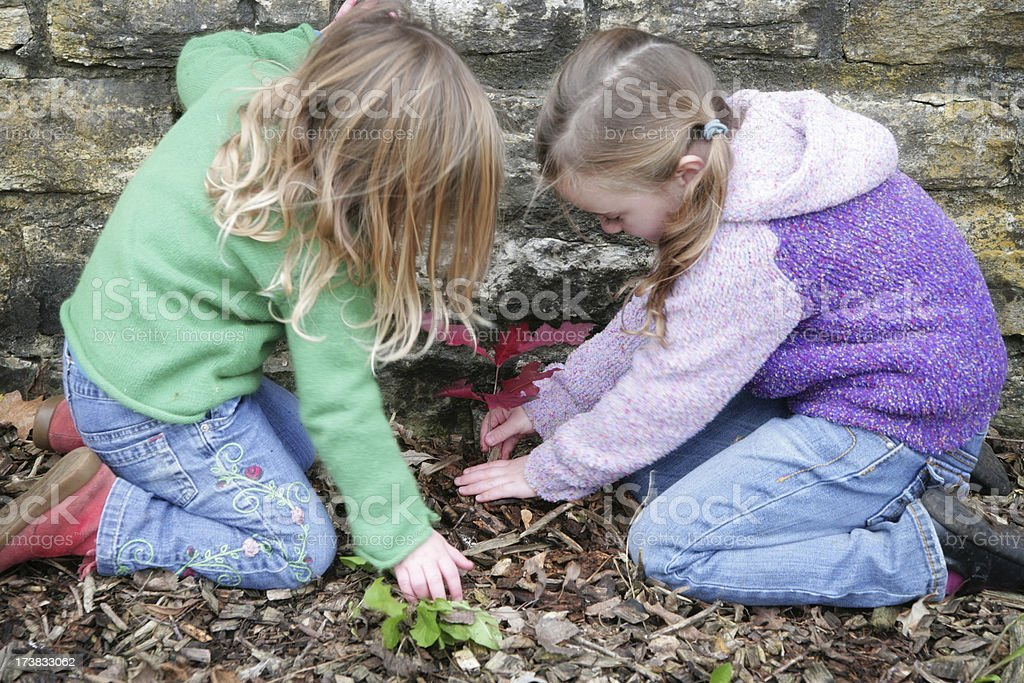 Little Girls Planting a Tree Seedling royalty-free stock photo