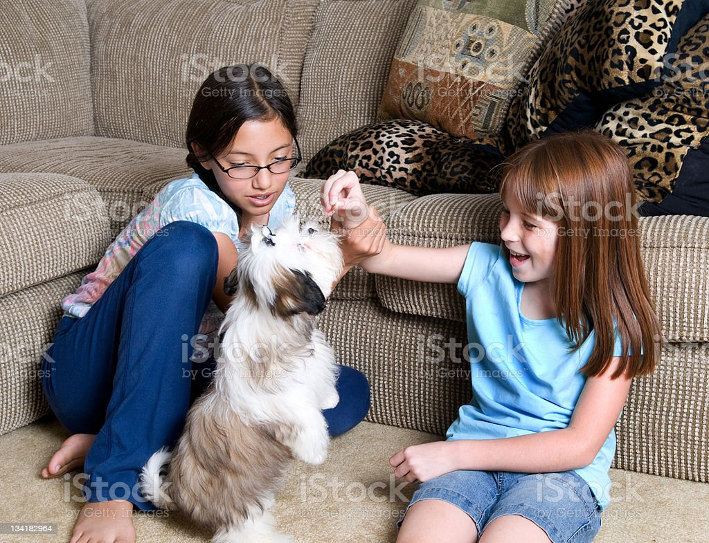 Little Girls Playing with Dog stock photo