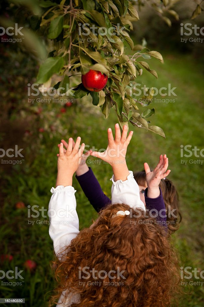 Little Girls Reaching for an Apple on Tree in Orchard royalty-free stock photo